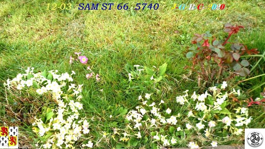 FLEURS  &  NATURE:   D   04/05/2020