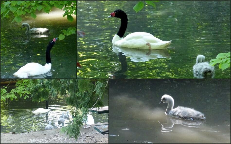 La Hôtoie, le Zoo, c'est à Amiens