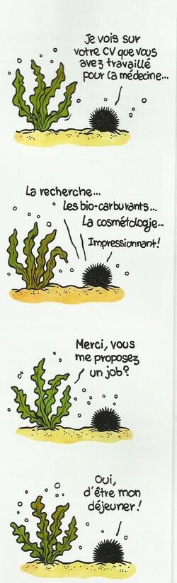 Planète algue