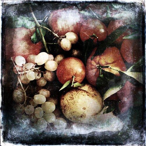 Les fruits et les fleurs de l'hiver.