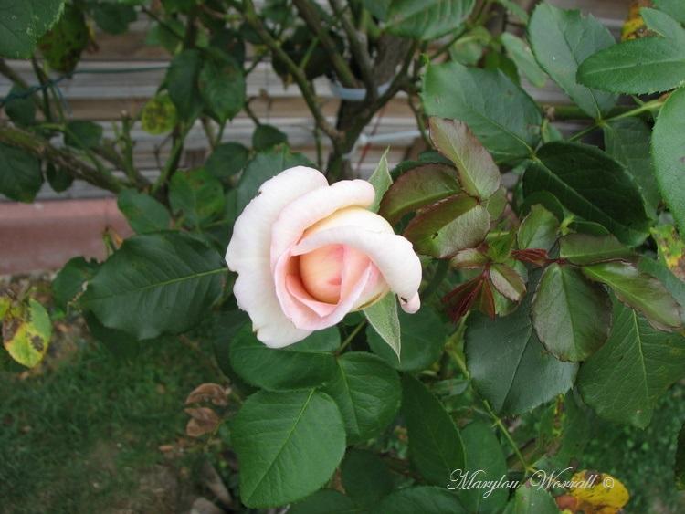 Ingersheim : Encore un peu du Petit coin de paradis