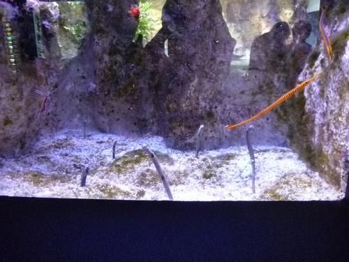 Les vacances des courageux II: l'aquarium de la Rochelle