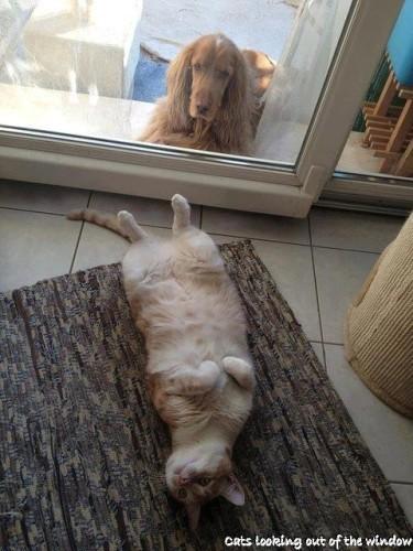 chat-fenetre-chien.jpg