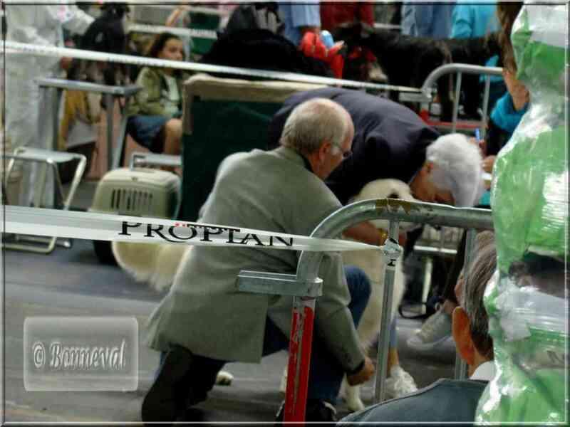 Exposition canine Tarbes CACIB, 18 mai 2008