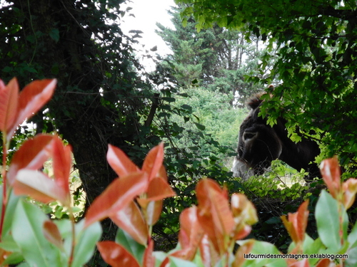 Jardins dans le Gers