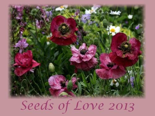 Seeds of Love 2013 logo