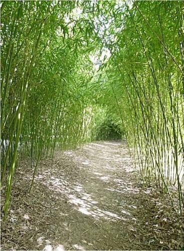 bamboo-parc--9-.jpg