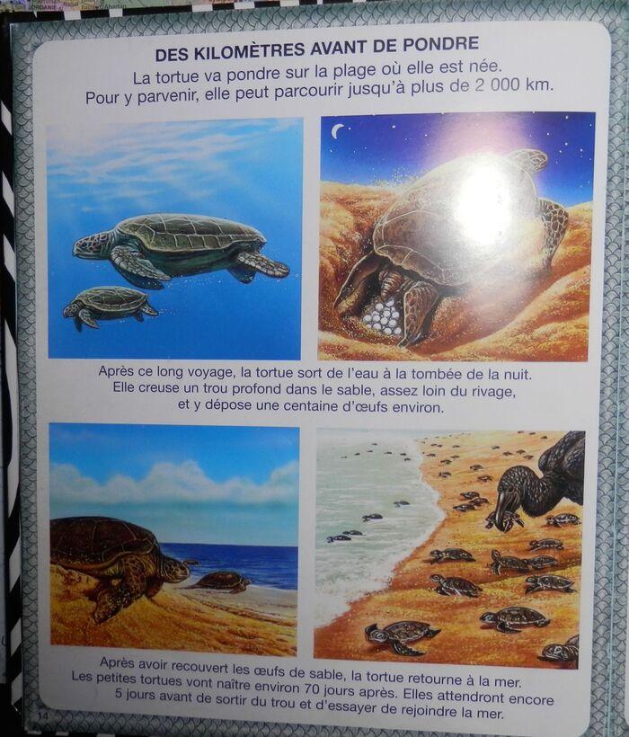 Ressources : les records des animaux.