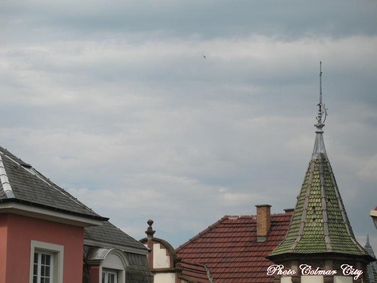 Ciel d'Alsace 164