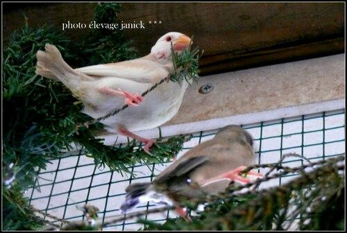 4 bébés paddas sortis du nid