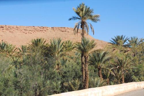 Un beau ruban de palmiers