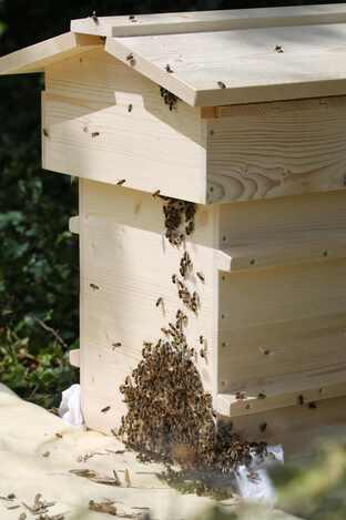 Les ruches warré
