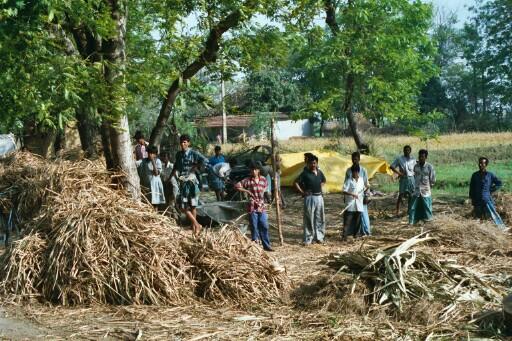 la fabrication du sucre de canne au Bengale