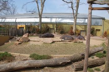 zoo cologne d50 2012 215