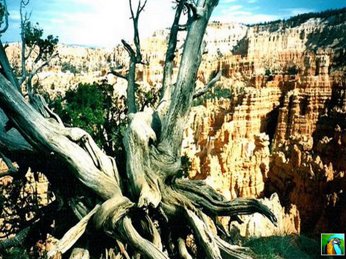 Ouest américain : Brice Canyon