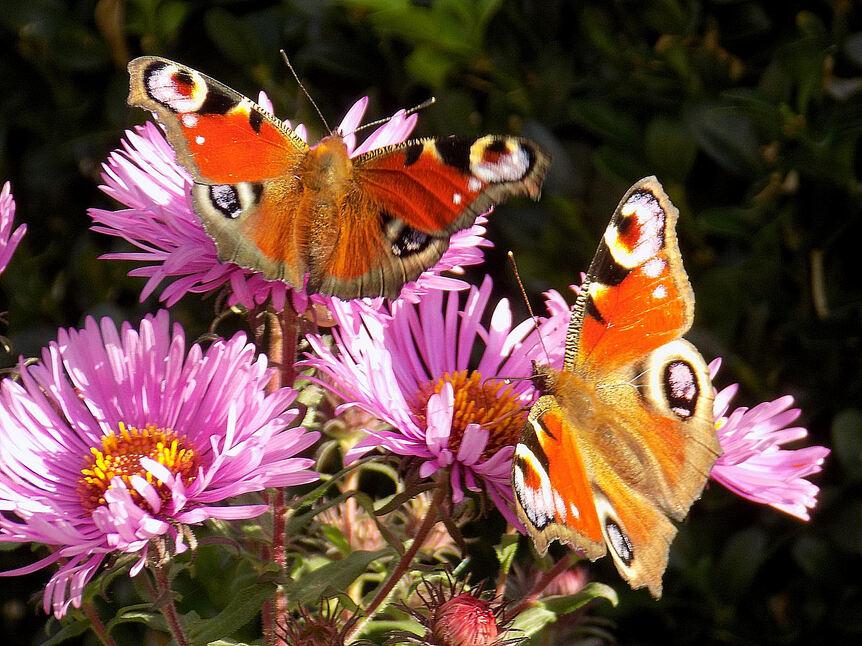 Des ailes dans le jardin