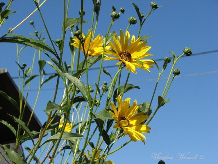 Ingersheim : Il fait toujours bon au jardin