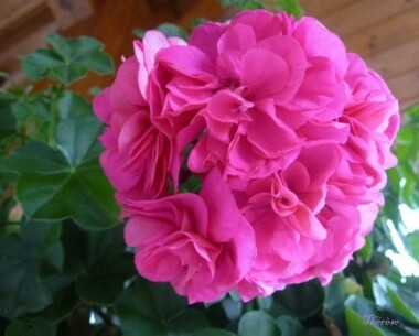 Fleurs d'automne (1)