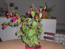 Des plantes partout... j'aimeeeeeeeeeeeee