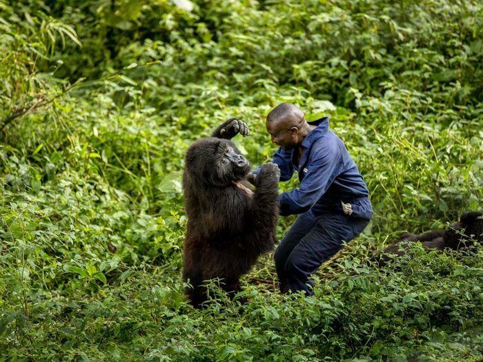Le Parc National De Virunga - République Démocratique Du Congo