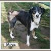 Mirza 1