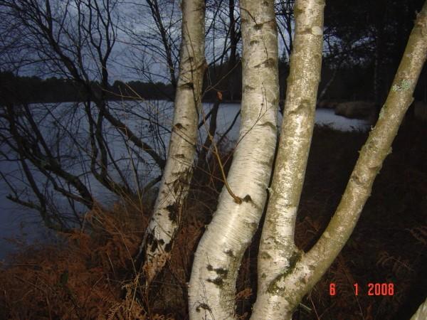 Un soir au lac le 6 janvier 2008 003