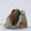 Chang dans la neige 029.jpg
