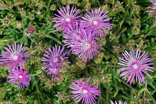 Des petites fleurs à la belle couleur mauve !