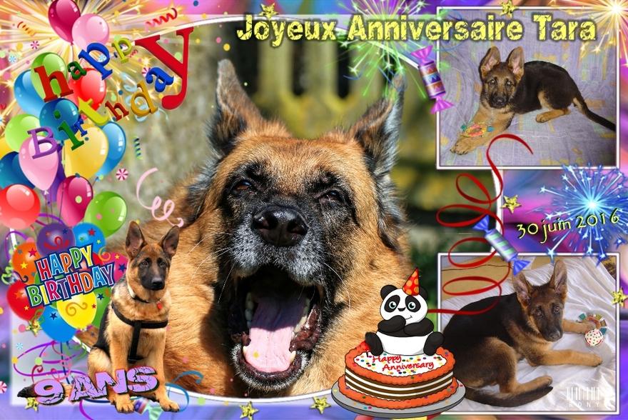 9 ans aujourd'hui, bonne anniversaire mon chien
