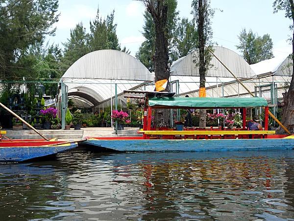 Mexico-Xochimilco-pepiniere.jpg