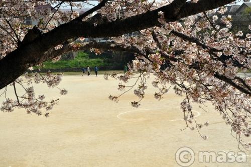 printemps 2011 à Fukuoka