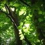 Vert lumière 2