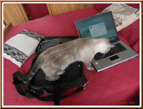 Experte en informatique