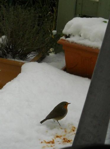 En-visite-sur-la-neige-Rouge-gorge.jpg