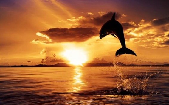 http://b.imdoc.fr/1/animaux/dauphins/photo/0473929047/21638604fd4/dauphins-coucher-soleil-superbe-img.jpg