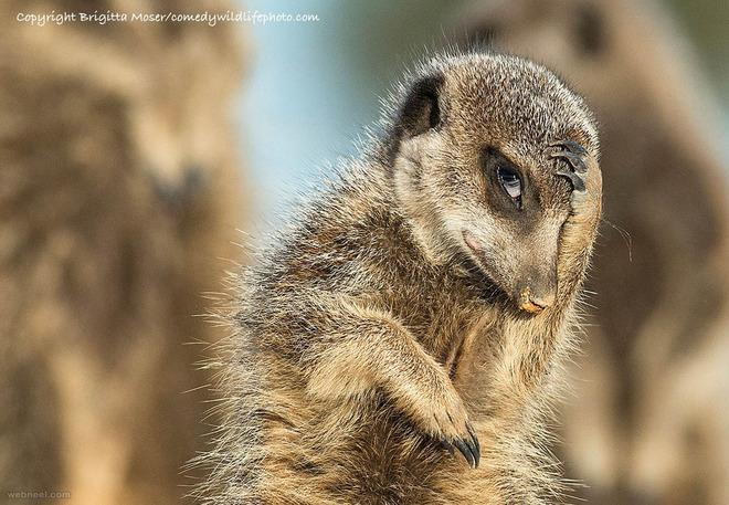 sneak a glance comedy wildlife photography