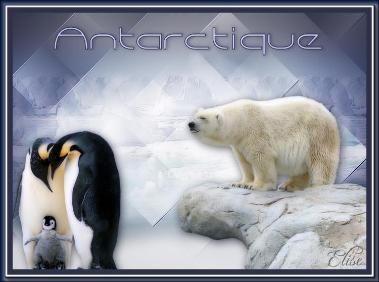 Antarctique   de Violine