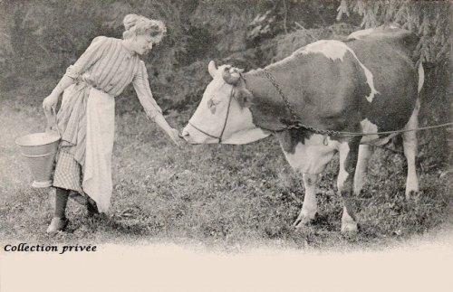 17- Des vaches autrefois