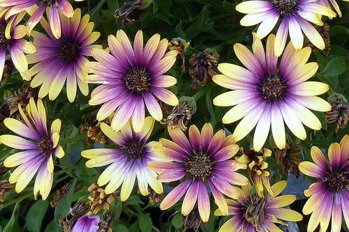 Encore de jolies fleurs ! (3)