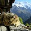 Bain de soleil sur le mont