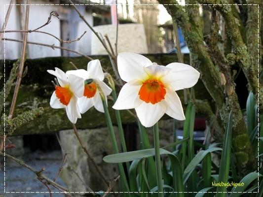 Fleurs-printemps-2011 0823
