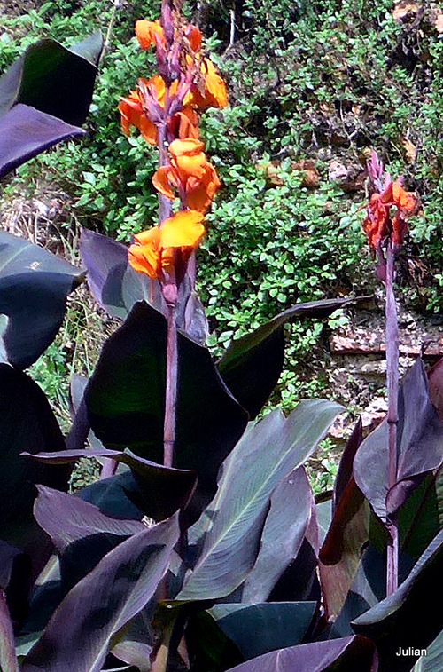 Des plantes aux belles feuilles et aux jolies fleurs !