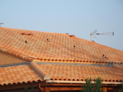 Spectacle-sur-le-toit-VIII-25011-DSC02095-bis.JPG
