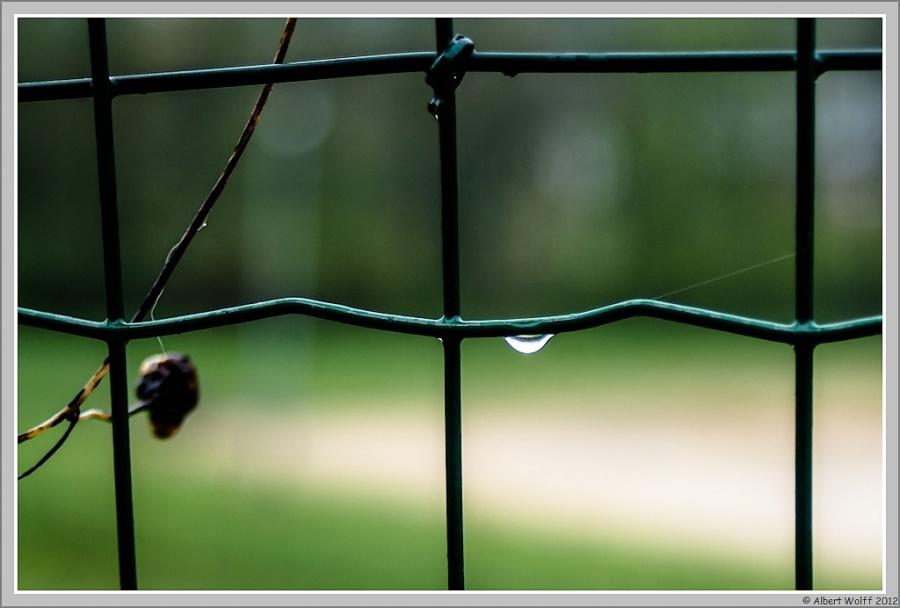 Pluie et surprises...