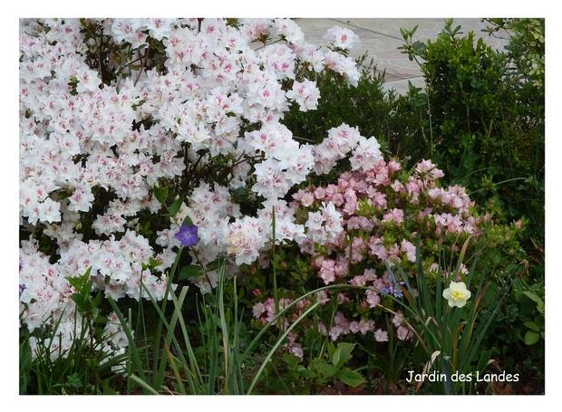 Avril au jardin.