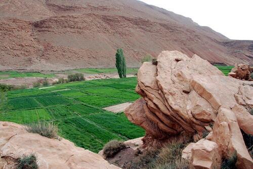 Champs cultivés au bord de l'oued
