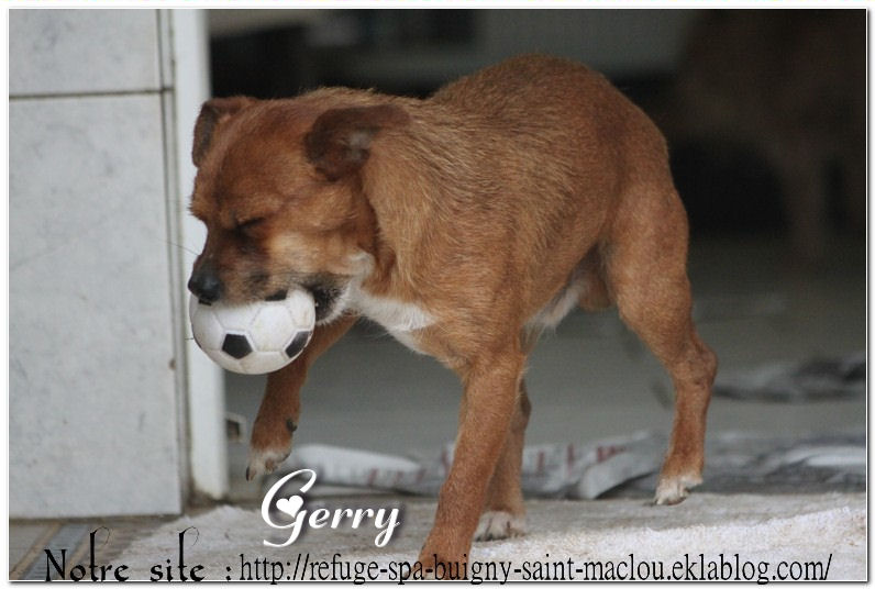 Gerry - nouvelles photos
