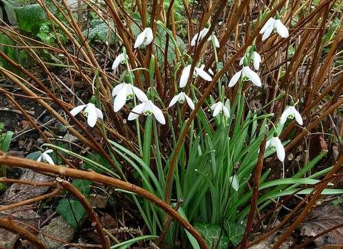 Floraisons hivernales