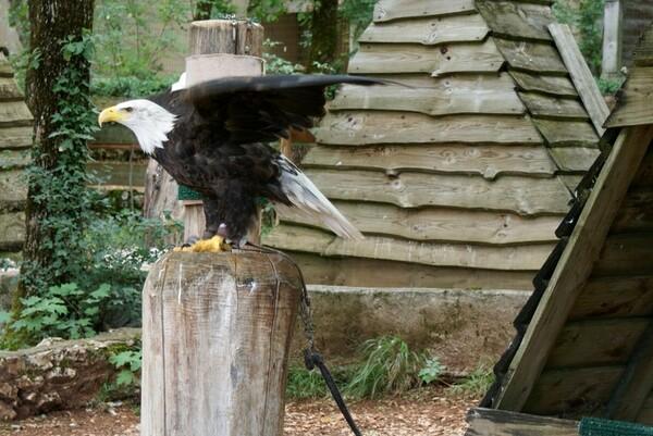 oiseaux rapaces