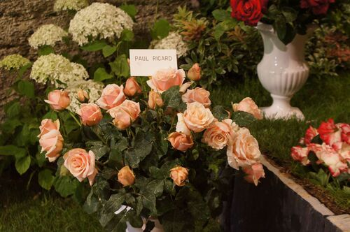Journées de la Rose : cave Crespin Chatenay